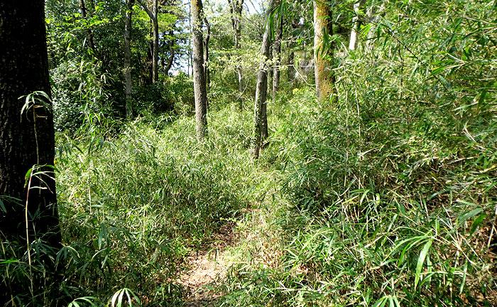 向原の森公園